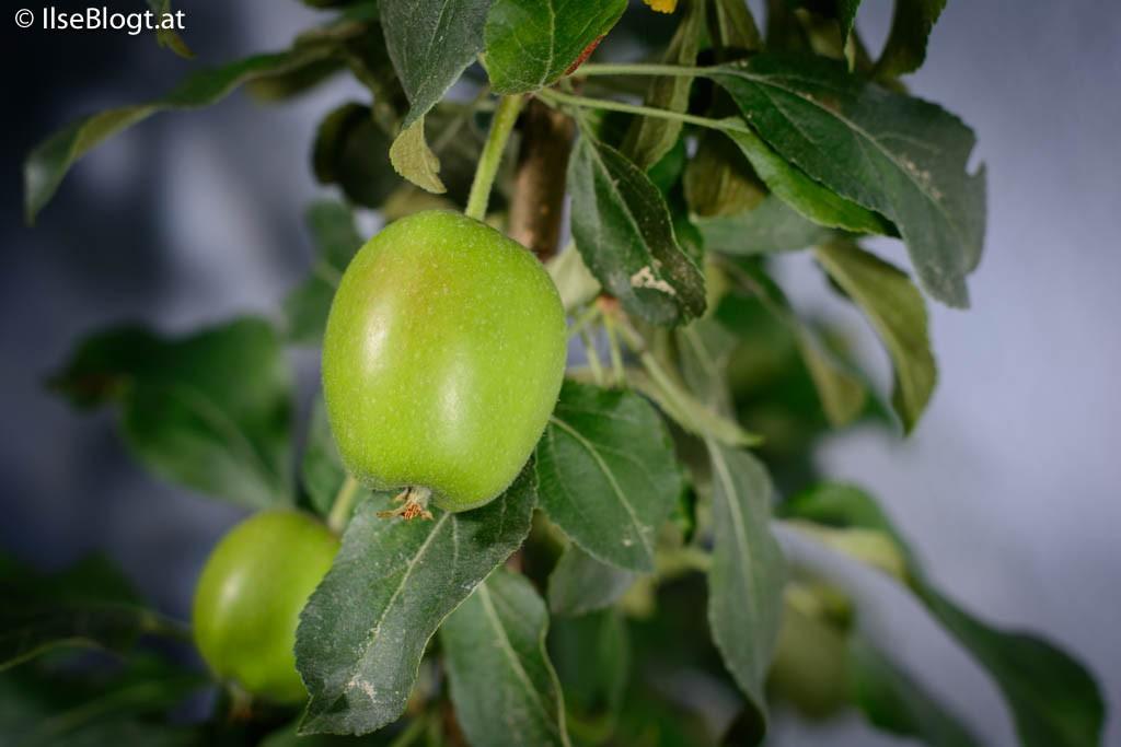 Apfel-0001