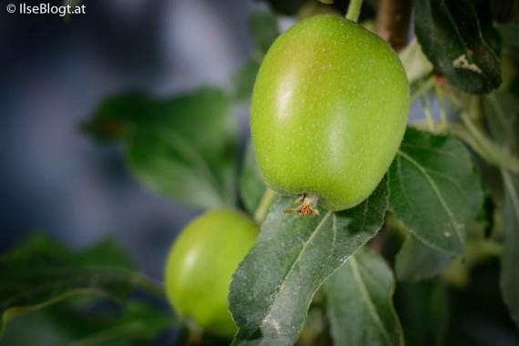Apfel-0002